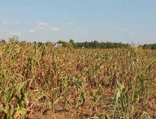 Drought Remains Concern