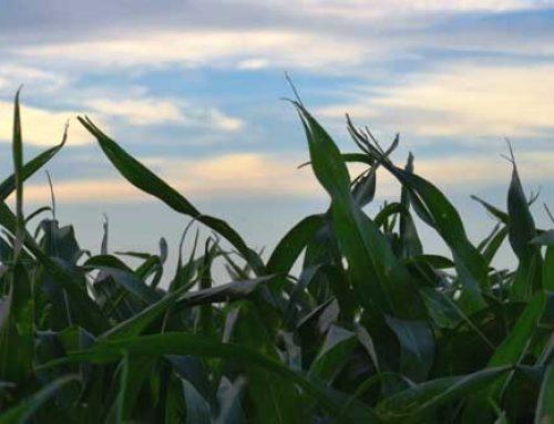 2013 Crop Season In Review
