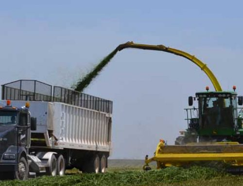 Consider Haylage for First Cutting Alfalfa