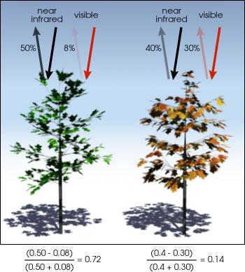 Plants showing NDVI illustration