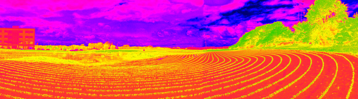 A field viewed through a IR camera and converted to NDVI
