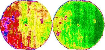NDVI shows variation in crop development.