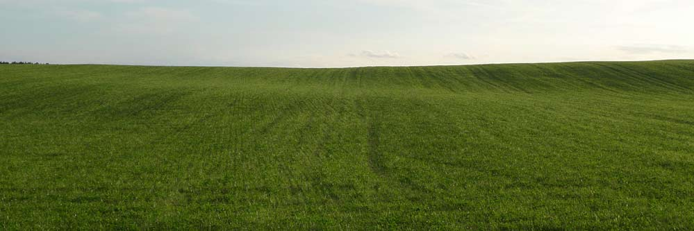 Phosphorus an Important Nutrient for Successful Wheat Production