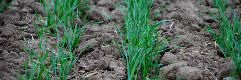 Topdress Application Timing in Winter Wheat