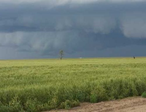 Recent Rains Bring Hope for Summer Crops