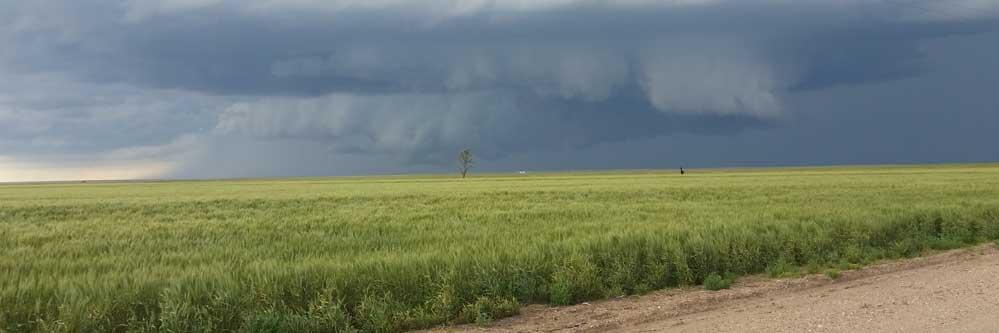 Recent Rains Bring Hope for Summer Crops