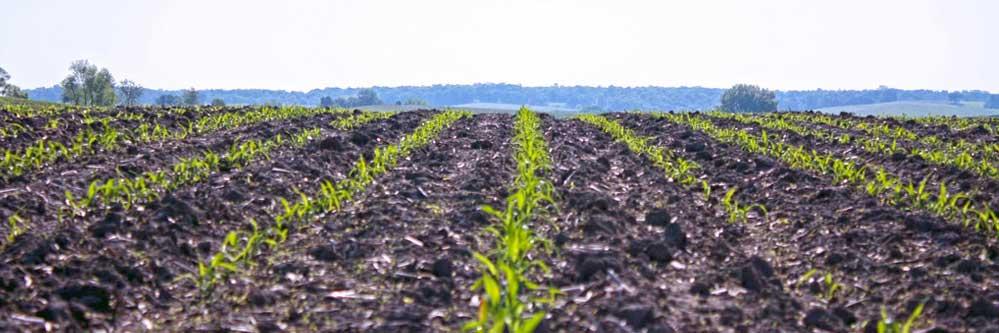 Selecting Postemerge Herbicides