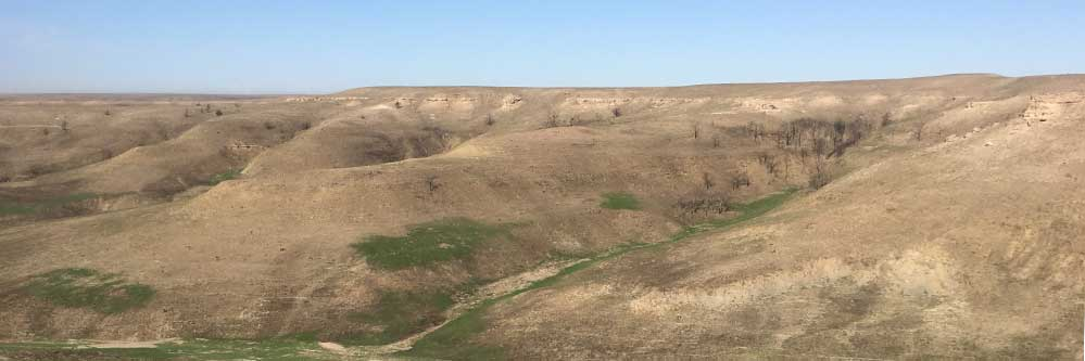 Pasture Recovery After Grassfire