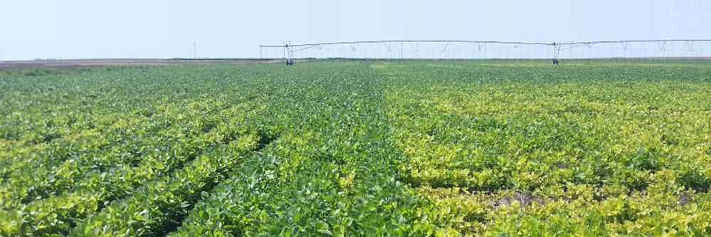 When Average Won't Cut It – Variable Rate Soygreen Application