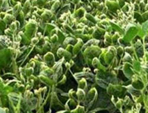 New Dicamba Rules Coming For 2018 Include TRAINING and CERTIFICATION
