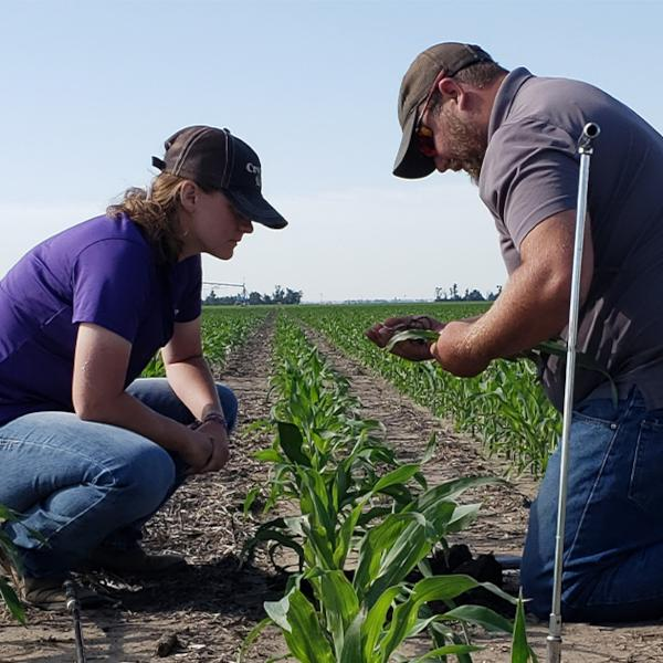 Farm Record Keeping Crop Scouting Data Collection